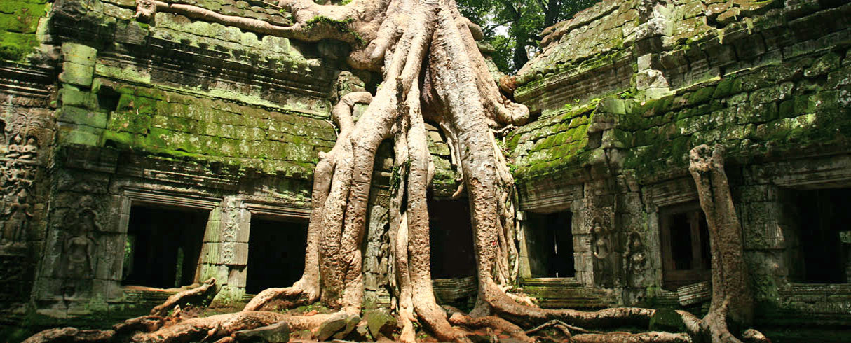 Divoká příroda ve zříceninách Angkoru, Kambodža