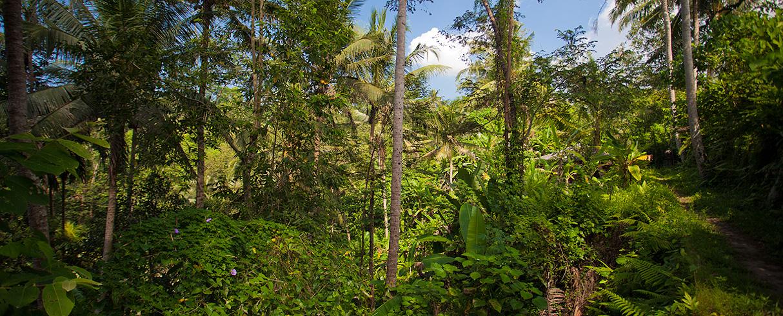 Goa Gayah jungle, Bali, Indonésie