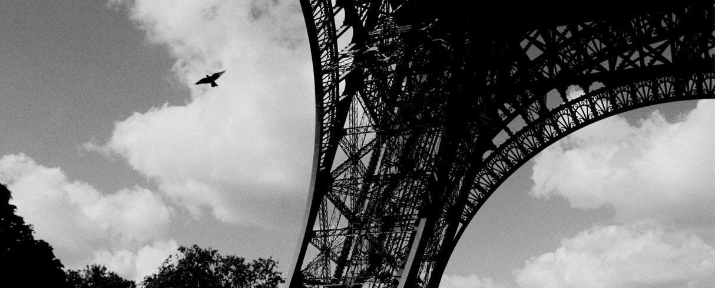 Havran, Eiffelova věž, Paříž, Francie