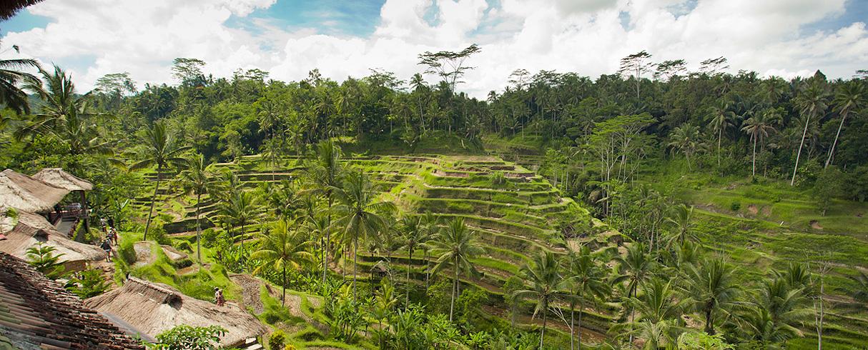Rýžová pole Tegalalang, Bali, Indonésie