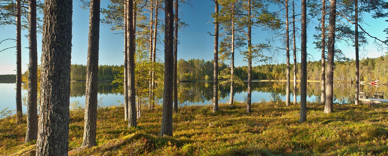 Panenská příroda u jezera Tallträsket - Švédsko