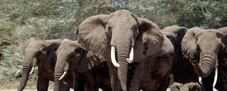 Národní park Tsavo, Západní Keňa